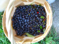 Healthy and Delicious Dried Blueberries - Some Facts, Drying Tips and Recipes