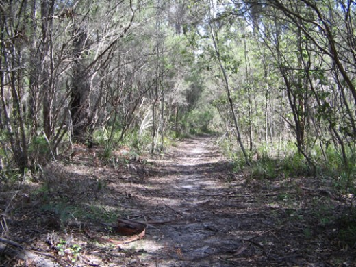 One of the many bush tracks to hear and see the native  fauna and flora