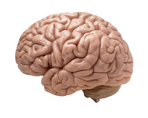 human brain from _DJ_ flickr.com
