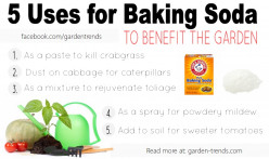 The Benefits and Uses of Baking Soda