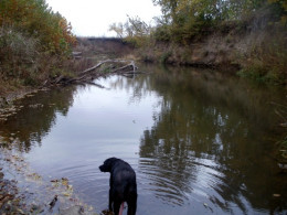 Molly out creek walking