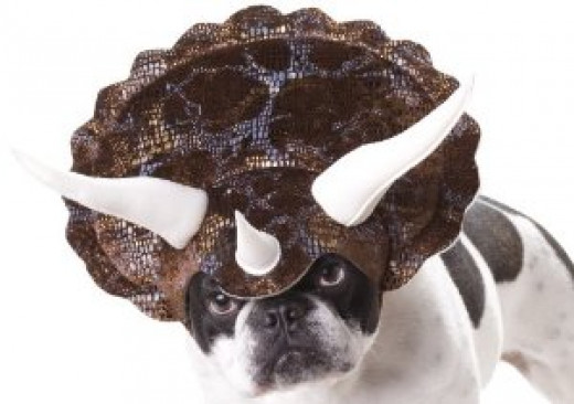 The dog hat.