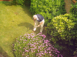 Gardening Prolongs Life - Its Good Exercise and Avoids Inactivity
