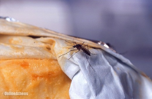 If your feet smell like stinky cheese, you may be attracting mosquitoes!