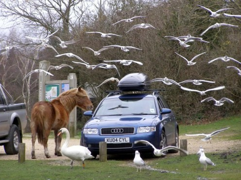 Visitors feed wildlife in a car park at the New Forest, UK