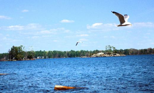 Sparrow Lake