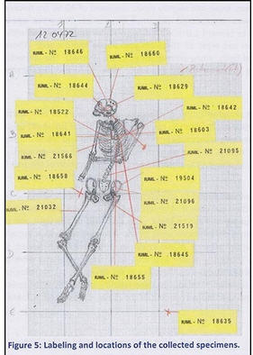 A diagram from where samples were taken.