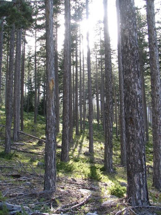 Forest Sun from stefg74 flickr.com
