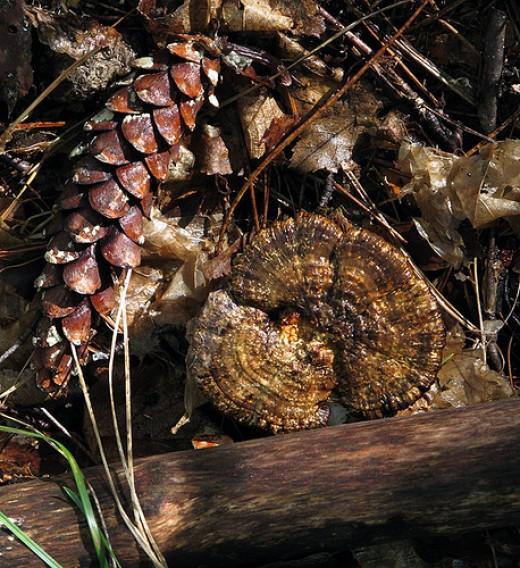 Forest Floor_1513 from photoranger54 flickr.com