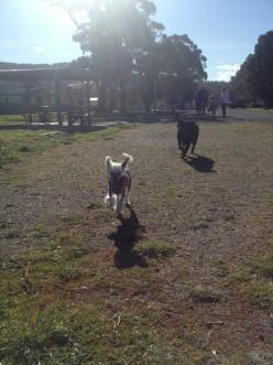 Tasmanian Dog Friendly Caravan Parks