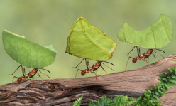 Amazing ants:Top 5 interesting facts about these Strong, tiny creatures that work better as a community than most humans