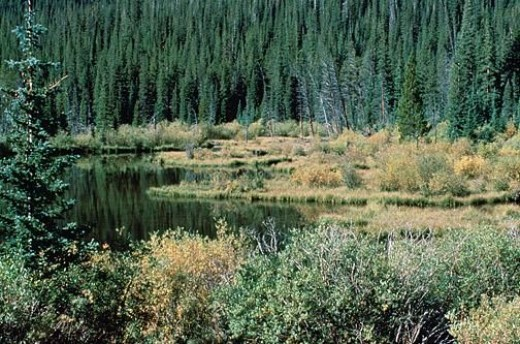 My encounter with a beaver pond in the Adirondack Mountains the previous year influenced how I handled some situations on the Appalachian Trail.