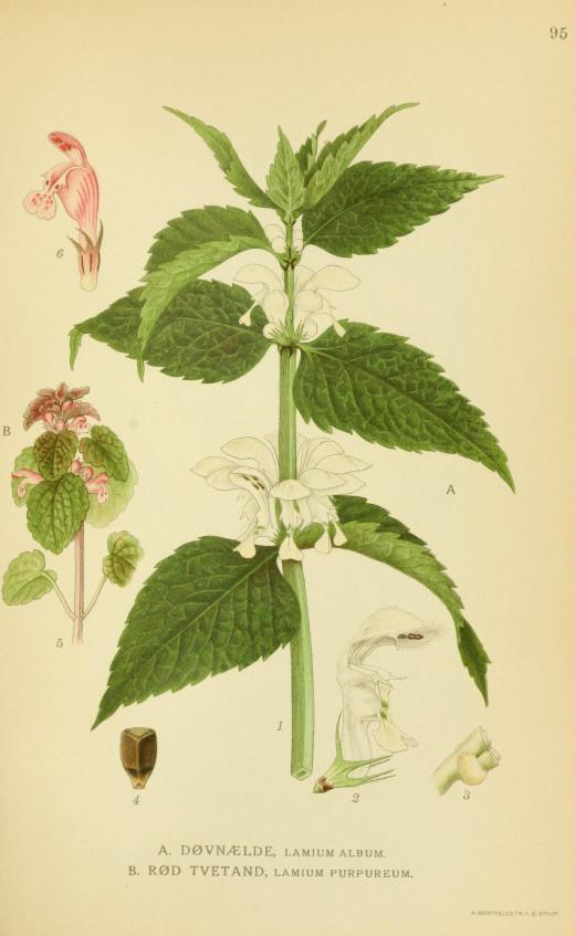 Billeder of Nordan's Flora 1917-1927