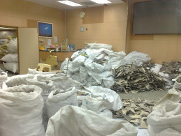 Shark Fin's stored in the Far East destined for regional dishes.