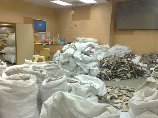 A room full of shark fins, the rest of the shark was wasted to fuel this industry.