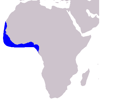 The range map of the Atlantic humpback dolphin