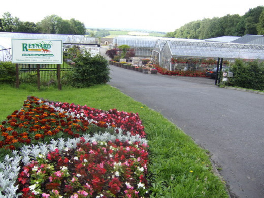 Bedding plants can be found in nurseries like this one - the staff should be able to help you find some good flowers.