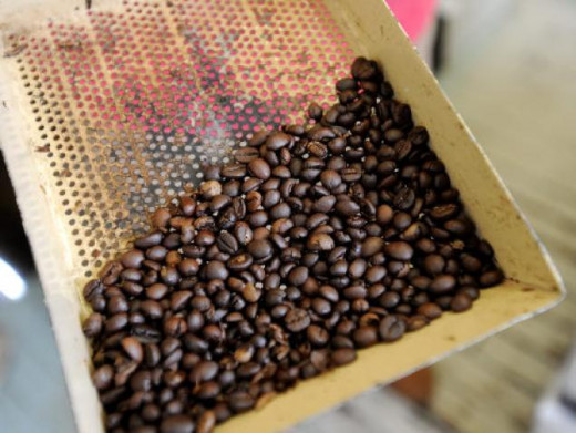 Roasted coffee beans made from collecting the poop from the civet cat and picking out the beans. Called 'Kopi Luwak,' the beans can cost up to $400 a pound. Read more: http://www.nydailynews.com/new-york/plucked-civet-feces-cat-poo-coffee-nyc-expensi