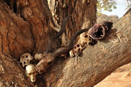"""Bones in Africa...perhaps one day will be used as a part of """"casting of the bones"""""""