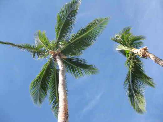 You can't go to Fiji without getting some palm tree photos for Facebook and so on.