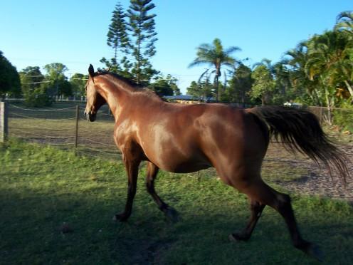 Horse Breeds and Temperaments
