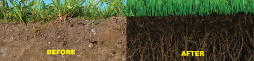 Love Your Lawn Love Your Soil Before & After