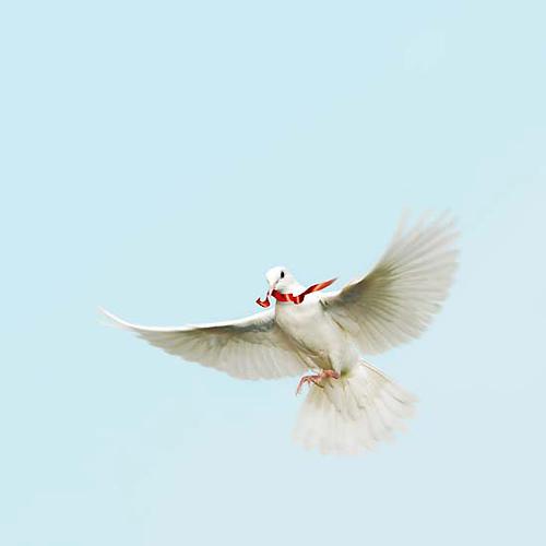 Peace from waqar bukhari flickr.com