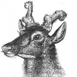Doe with Horns (1891)
