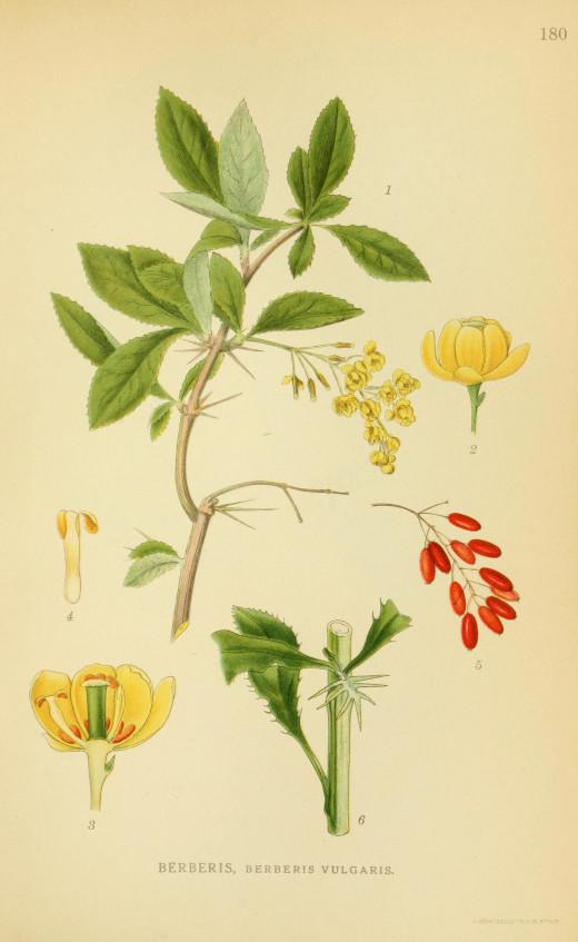 Billeder of Norden,s Flora (1917-27)