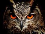 Owliver - my former boyfriend