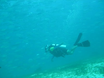 Fly under the sea