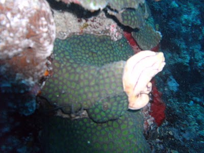 a coral in prayer