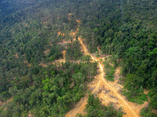 This photo from 2005 shows a road separating logged forest on the left and virgin forest on the right.