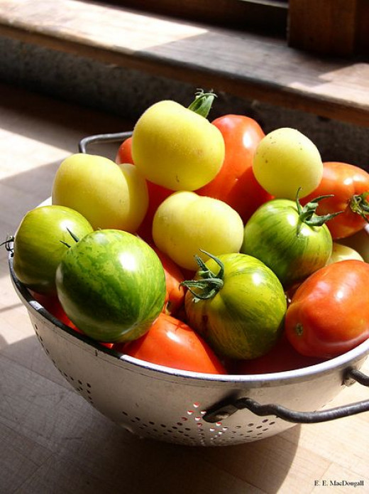 Green and Red tomatoes can be used to make home made chutneys. See the nutritional differences and great recipes here.