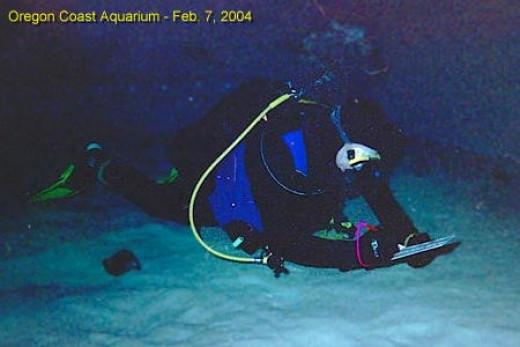 Ed Palumbo taking notes at the Oregon Coast Aquarium