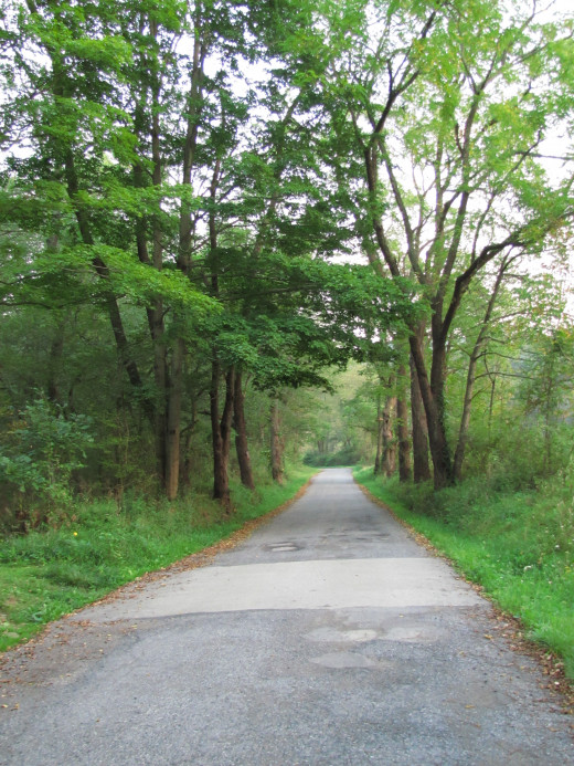 A long empty road through the wilderness.