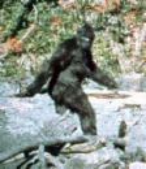 Is this really Bigfoot?