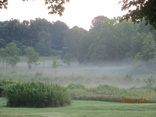 Morning mist off a country road.