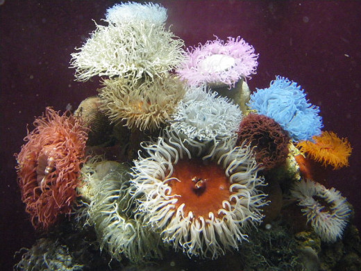 You can tell students that a sea anemone will close up when it gets touched, but students who experience it will have a deeper understanding of this amazing creature.