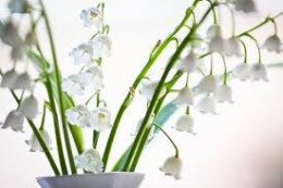 Lily of the Valley showed up at Faith's doorstep.