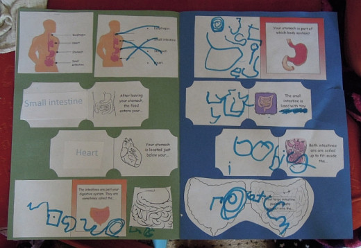 Part of a 'Human Body' project book created by a 7 year old home educated child.