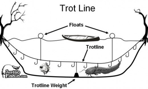 Free food catfishing with a trotline for Trout fishing line setup