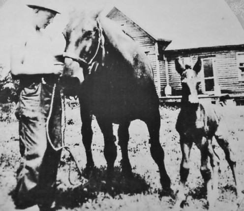My father with Molly and her foal (1943).