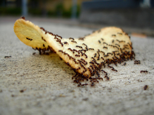 No one likes to clean up after ants