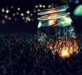 Fireflies: Summer Magic