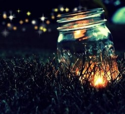 Fireflies: Summer Magic