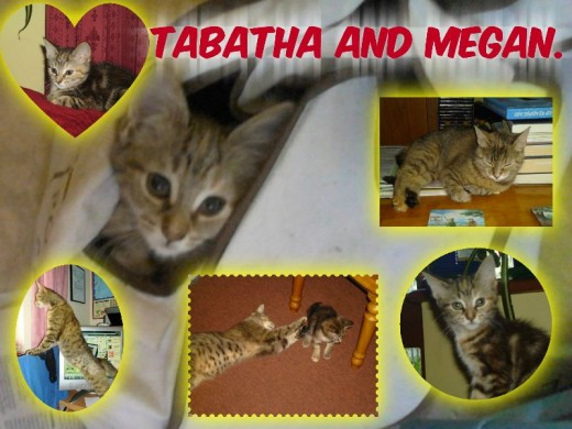 Tabatha and Megan.
