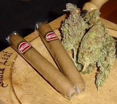 Cigars, three big buds- someone is getting ready to roll a blunt