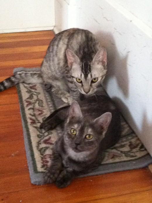 new kittens 2012