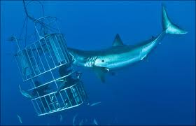 Making this shark cage seem flimsy indeed